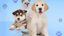Wauies – The Pet Shop Game